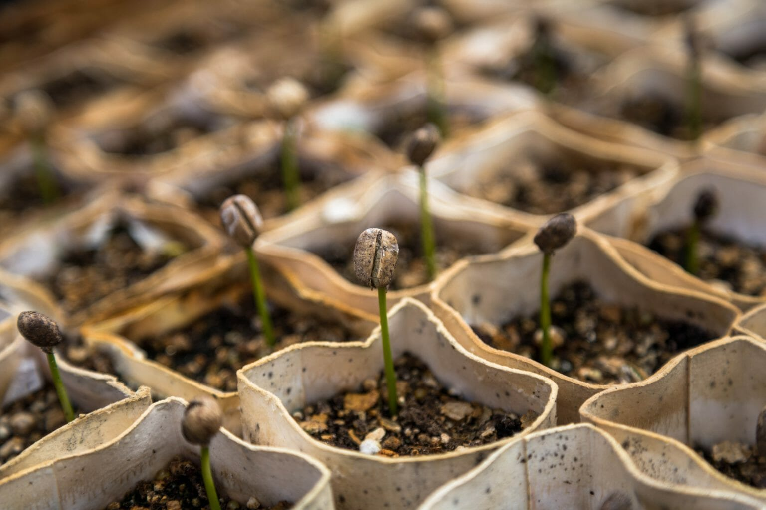 growing-plants- agriculture - sustainability