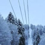 lumen peittämä puu