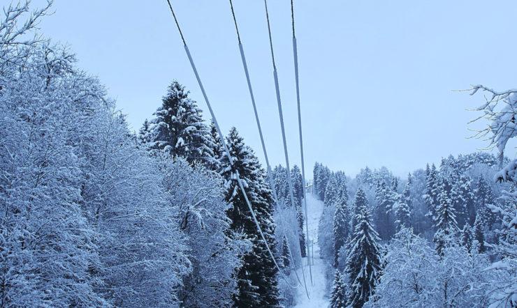 et træ dækket af sne