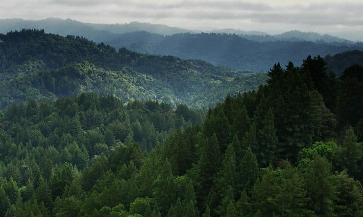 et træ med et bjerg i baggrunden